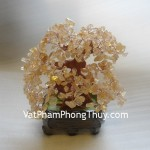 cay-thach-anh-vang-ca207-2
