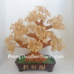 cay-thach-anh-vang-lon-01