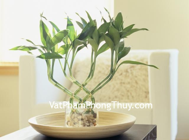 Bamboo plant on table by arm chair