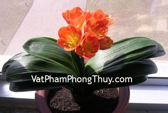 3-con-giap-phai-trong-cay-nay-moi-phat-tai-phat-loc-hinh-2-0814